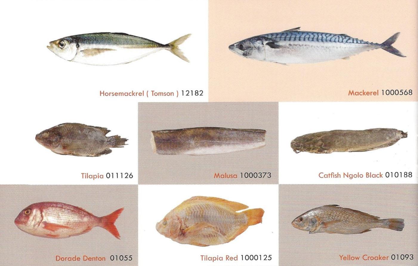 vissoorten_2